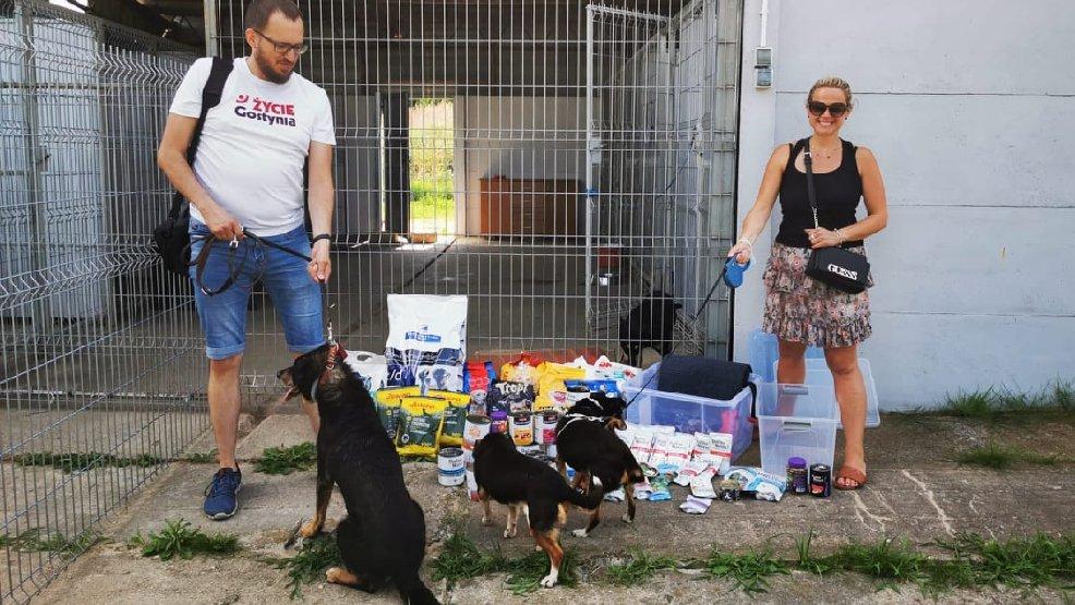 Zbiórka karmy dla przytuliska dla psów w Smogorzewie przyniosła nadspodziewany efekt - Zdjęcie główne