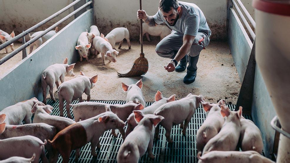 Rolnicy mogą starać się o refundację wydatków na bioasekurację  - Zdjęcie główne