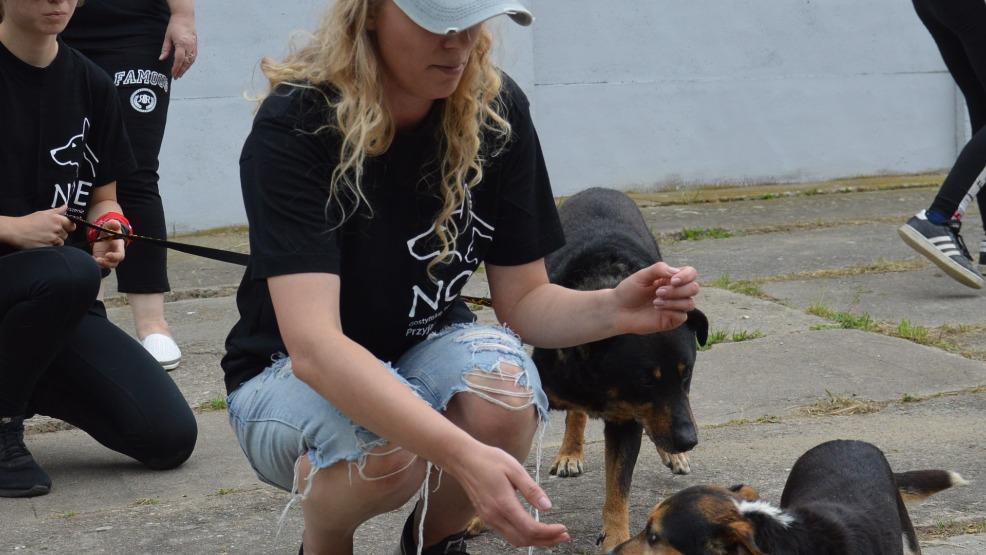 Dzięki wolontariuszom z przytuliska dla psów w Smogorzewie już ponad 70 najlepszych przyjaciół człowieka znalazło nowy dom - Zdjęcie główne