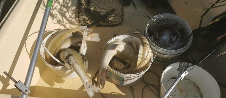 Zatrucie zbiornika w Roszkowie? Padło ponad 200 kg ryb. Zobacz, co ustalono - Zdjęcie główne