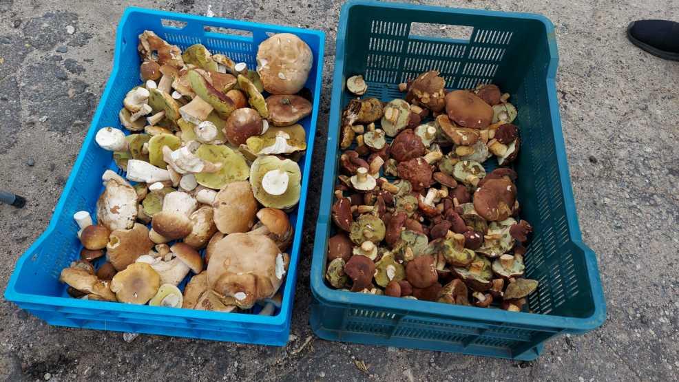 Drożeją owoce na jarocińskim targowisku. Są już grzyby RAPORT  - Zdjęcie główne