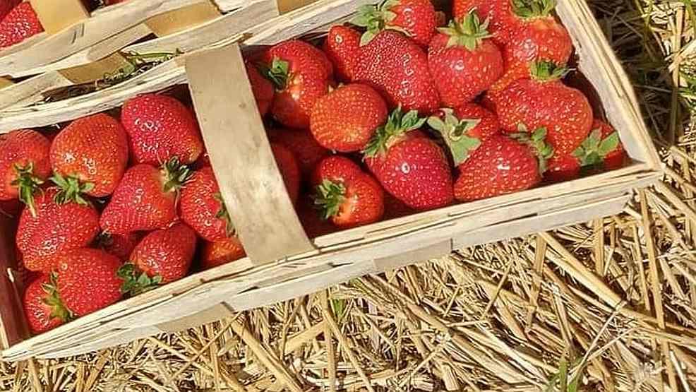 Ile zapłacimy za owoce w Jarocinie? Jak wyglądają ceny na targowisku i straganach? Czy jest taniej?  - Zdjęcie główne