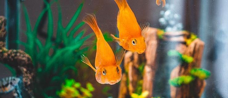 Ubezpieczenie akwarium w domu i mieszkaniu - Zdjęcie główne