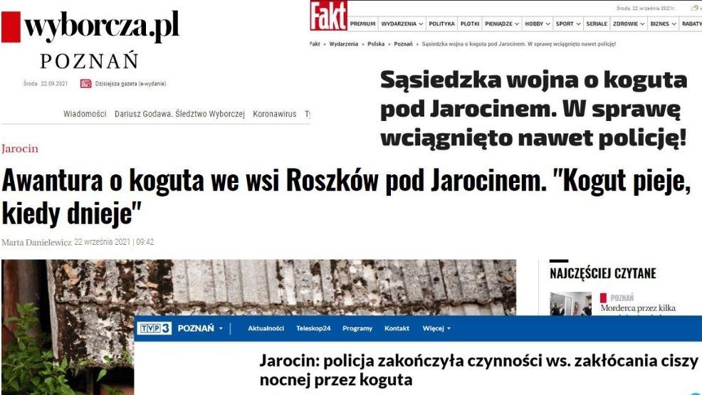 Piejący kogut spod Jarocina bohaterem ogólnopolskich mediów. Co napisali?  - Zdjęcie główne