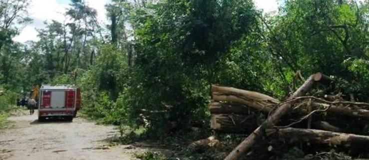 Dwa lata sprzątają skutki huraganu. ZOBACZ, gdzie nadal obowiązuje zakaz wejścia do lasu - Zdjęcie główne