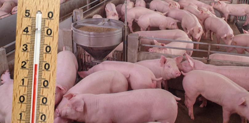Zwierzęta rosną szybciej i są zdrowsze - Zdjęcie główne