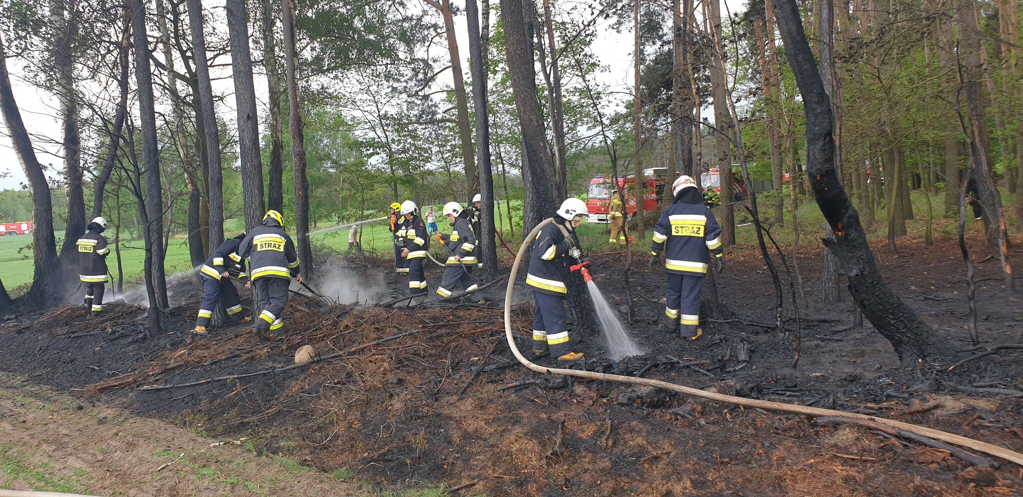 Ogień w lesie. Sześć zastępów straży w akcji  - Zdjęcie główne