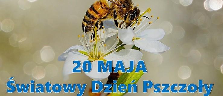 Pszczoły mają dziś swoje święto - Zdjęcie główne