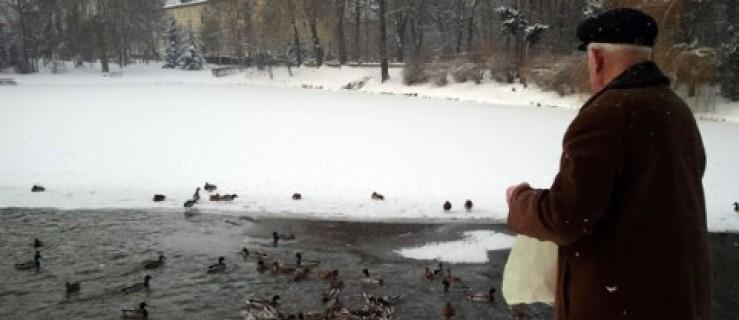 Głodne kaczki zaczepiają ludzi [WIDEO + AKTUALIZACJA] - Zdjęcie główne