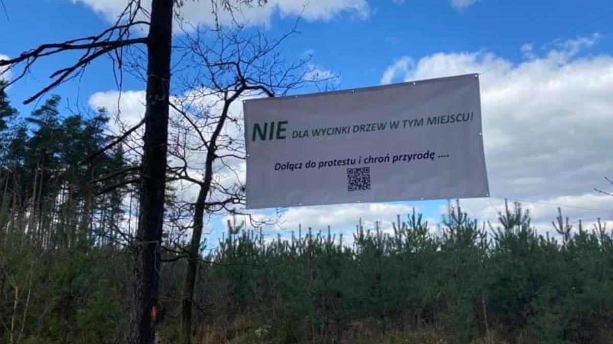 Grupa mieszkańców protestuje przeciwko wycinaniu drzew pod drogę Cielcza - Wilkowyja [GALERIA] - Zdjęcie główne