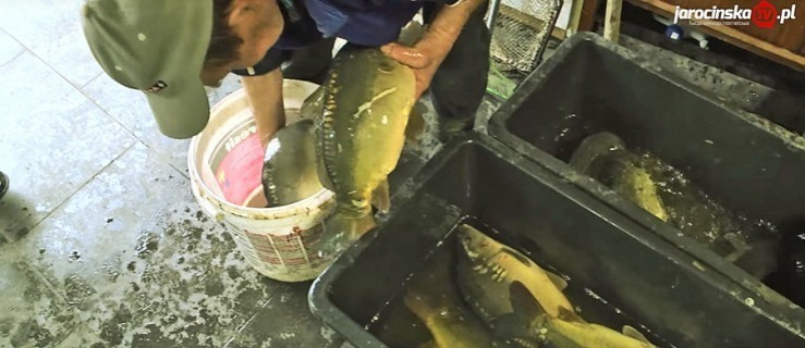 Karp mrożony czy żywy? Jak przewozić żywą rybę  - Zdjęcie główne