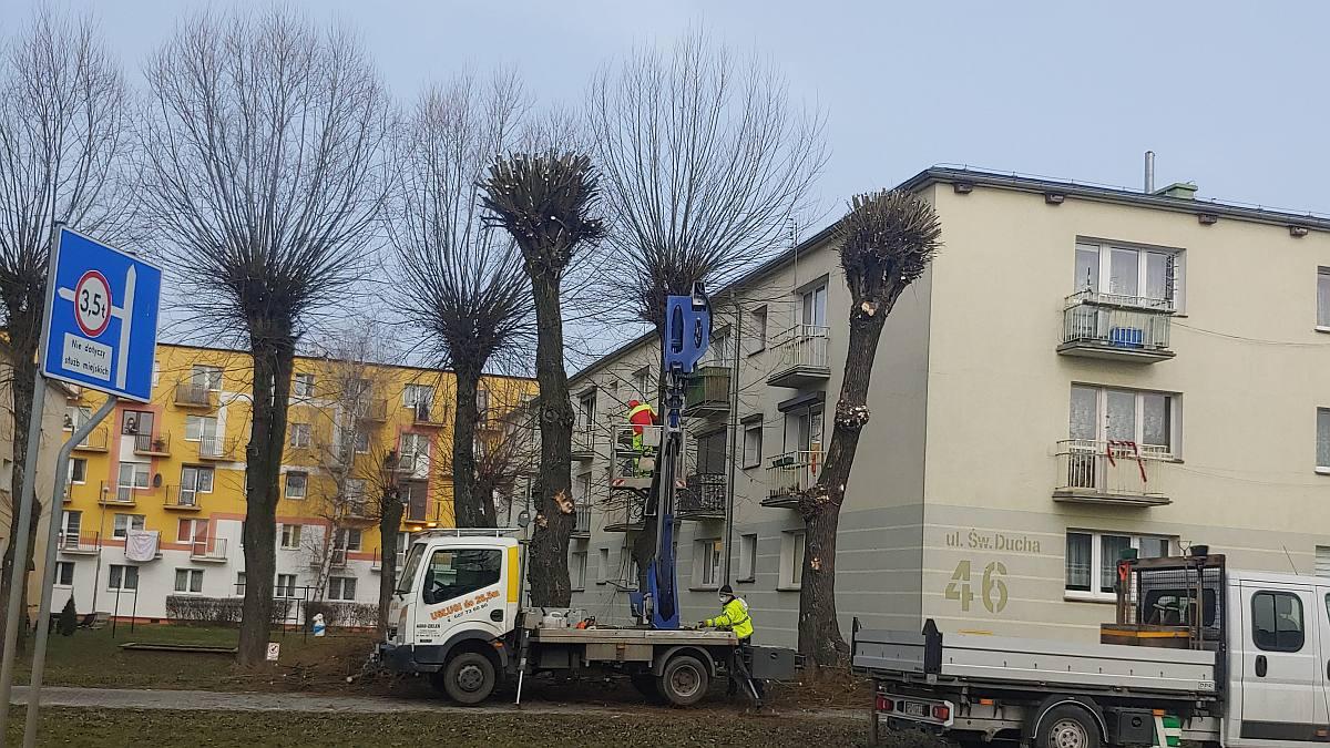 Jarocin. Rozpoczęło się wiosenne przycinanie drzew na terenie miasta  - Zdjęcie główne