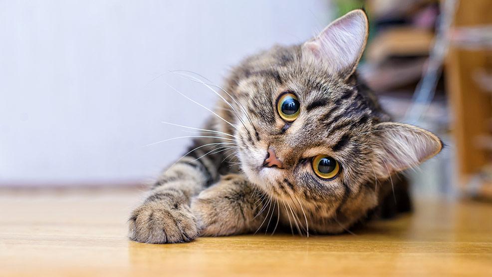 O co chodzi kotu? Dowiedz się jak czytać jego zachowanie! - Zdjęcie główne