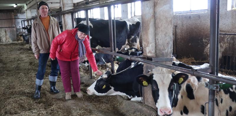 Najlepsze krowy dają 10 tys. litrów mleka rocznie - Zdjęcie główne