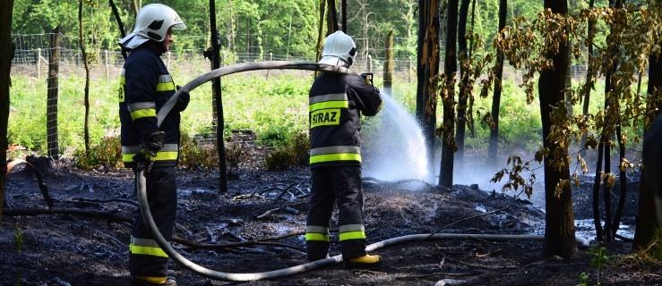 Uratowali las przed wielkim pożarem [WIDEO] - Zdjęcie główne