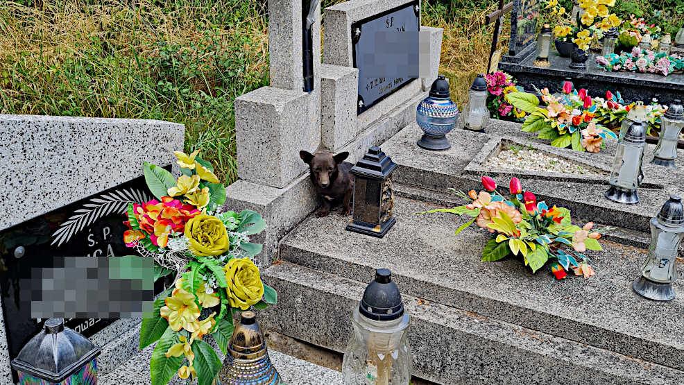 Pies koczuje na cmentarzu w Twardowie. Ludzie go dokarmiają - Zdjęcie główne