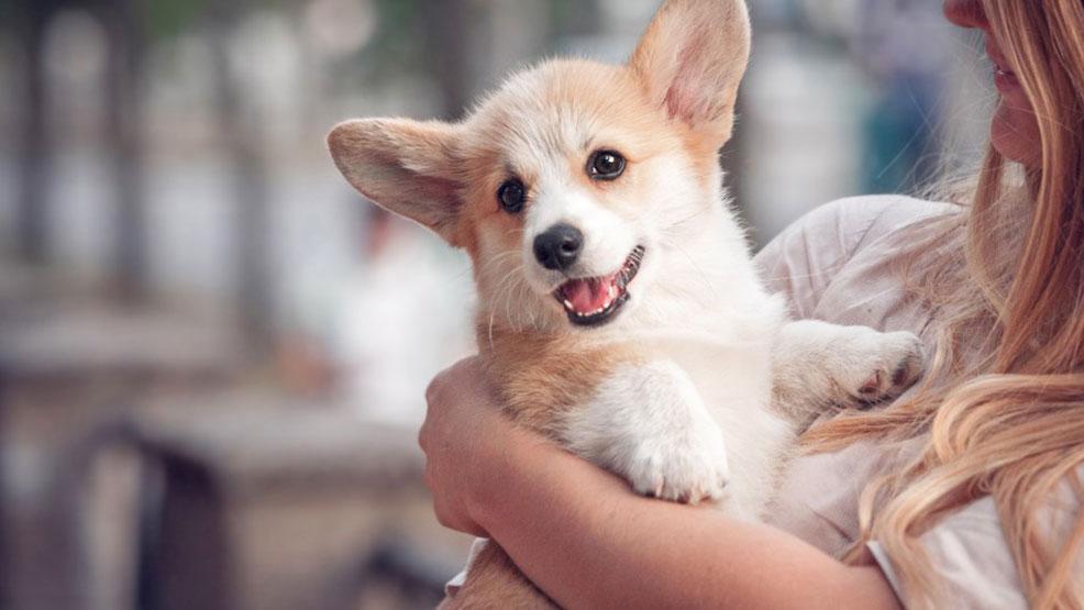 Karma dla psów małej rasy - na co zwrócić uwagę? - Zdjęcie główne