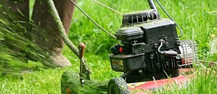 Jest susza, koszenie trawy zawieszone do odwołania - Zdjęcie główne