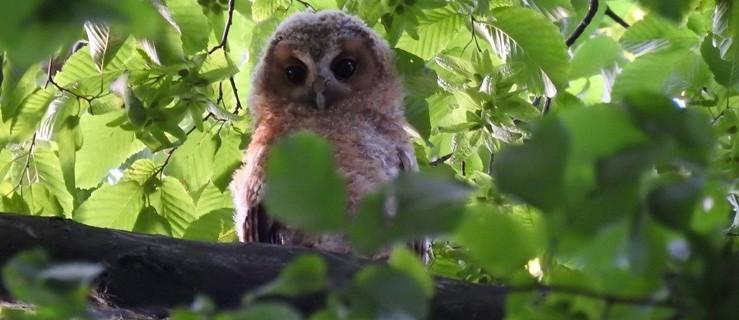 Drugie podglądanie ptaków. Już w niedzielę w jarocińskim parku - Zdjęcie główne