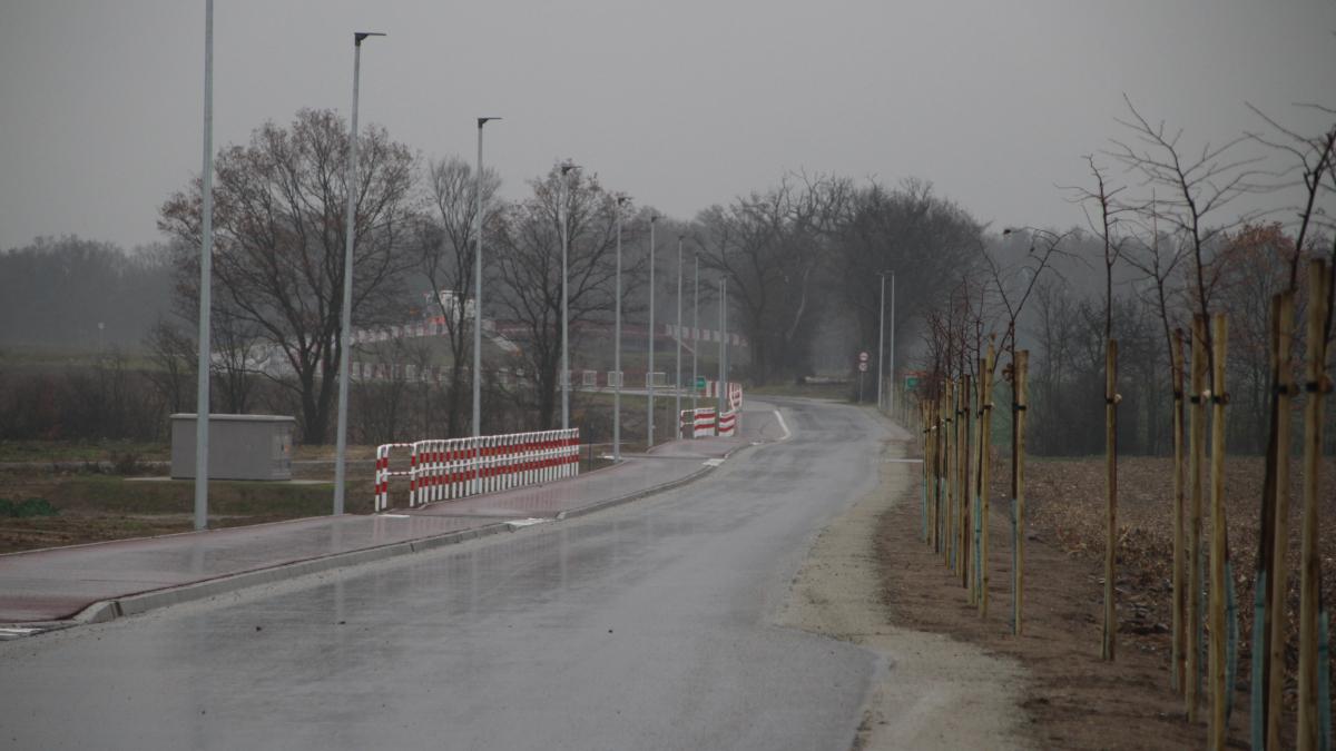 Jarocin. Radni opozycji nagrali film o wycince drzew pod budowę drogi. Jest komentarz magistratu  - Zdjęcie główne
