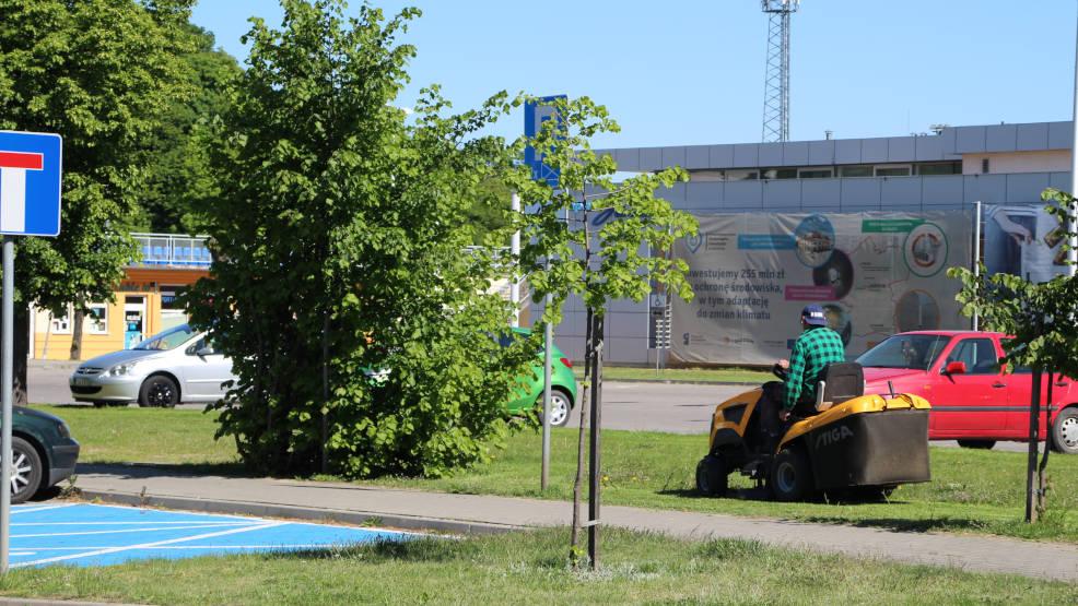 Jarocin. Gmina ogranicza koszenie trawników do miejsc, gdzie jest to niezbędne - Zdjęcie główne
