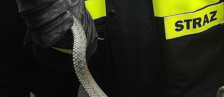 Nietypowa interwencja strażaków. Szukali węża w domu. Znaleźli… - Zdjęcie główne