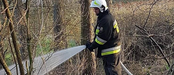 Uwaga! Obowiązuje najwyższy stopień zagrożenia pożarowego w lasach   - Zdjęcie główne