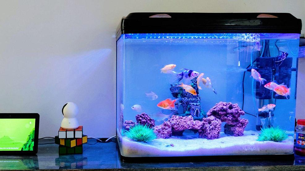 Wszystko co musisz wiedzieć o oświetleniu w akwarium - Zdjęcie główne