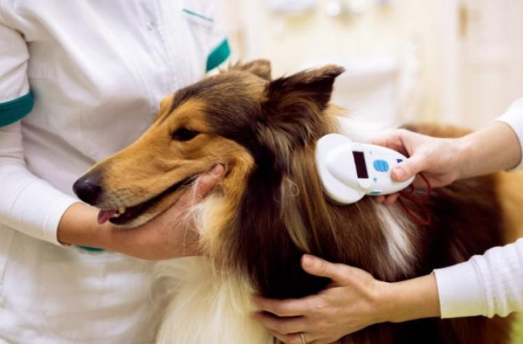 Sterylizacja i czipowanie psów na terenie związku Eko Siódemka - Zdjęcie główne