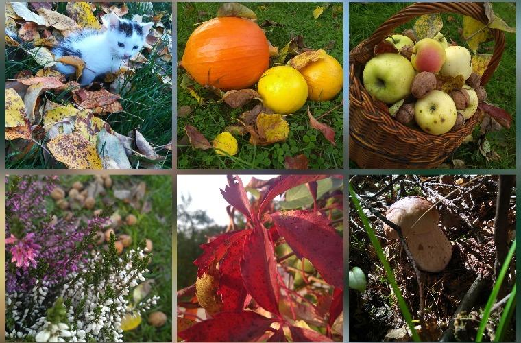 Krotoszyn. Jesień uwieczniona w ich obiektywie - Zdjęcie główne