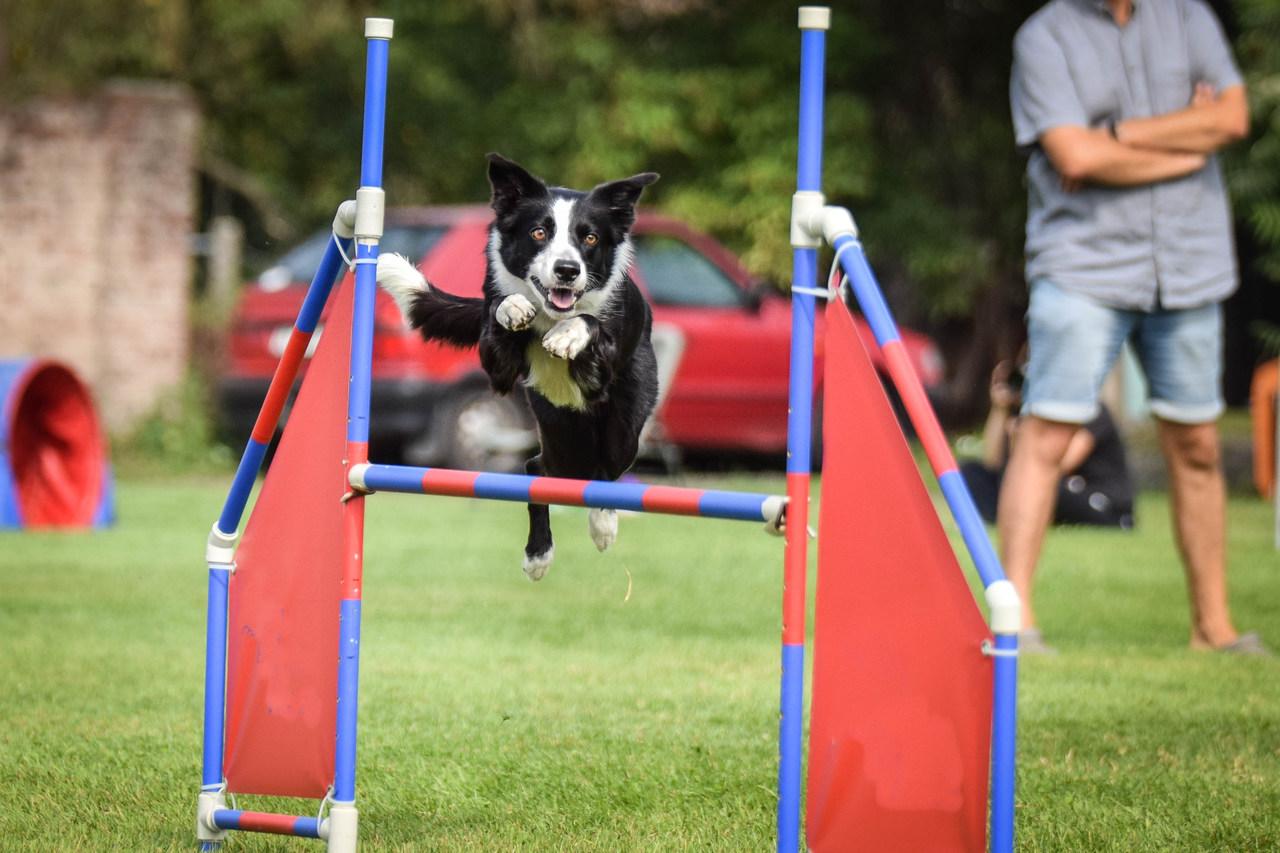 W Krotoszynie otwierają plac zabaw dla psów - Zdjęcie główne