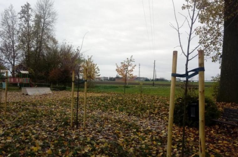 Sulmierzyce. Posadzili 50 drzew - Zdjęcie główne