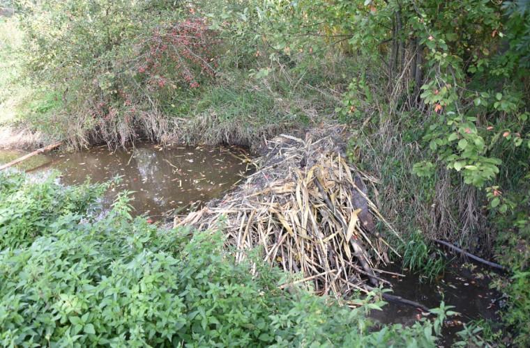 Bobry w gminie Kobylin [FOTO I FILM] - Zdjęcie główne