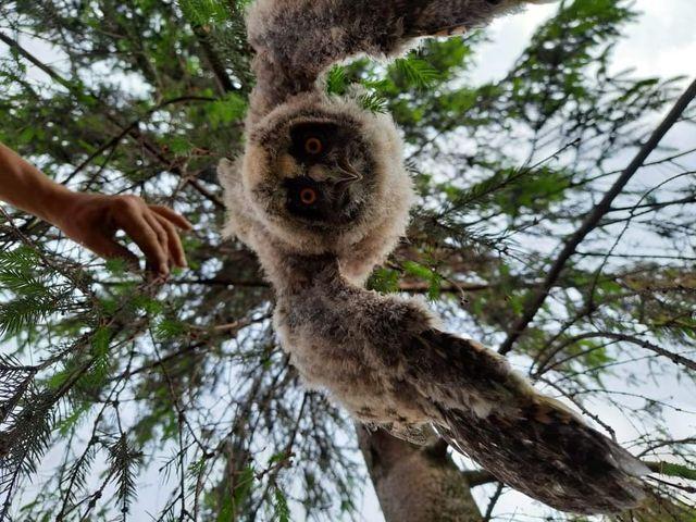 Powiat krotoszyński. Pojawiły się sowy. Niezwykły widok! [ZDJĘCIA] - Zdjęcie główne