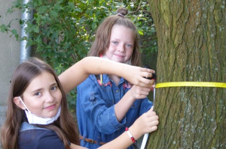 Świnków. Uczniowie wybrali się na pomiar drzew [ZDJĘCIA] - Zdjęcie główne