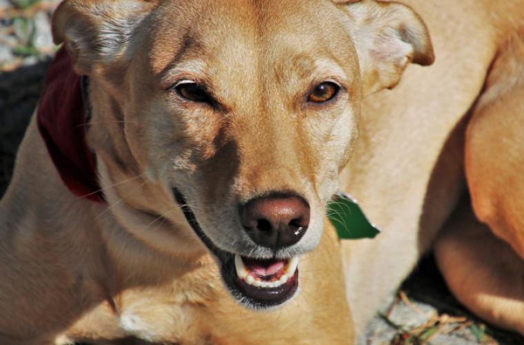 Powiat krotoszyński. Wysterylizuj za darmo swojego psa - Zdjęcie główne