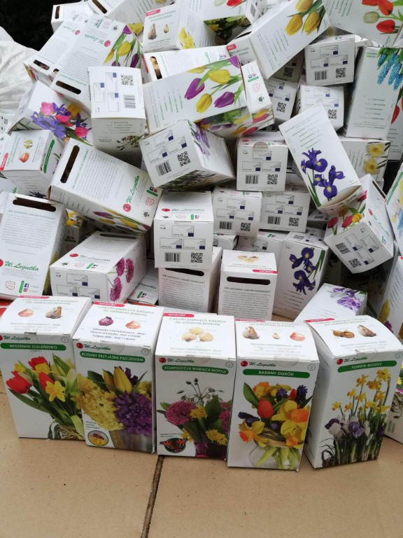 Kwiaty dla Kobylina - Zdjęcie główne