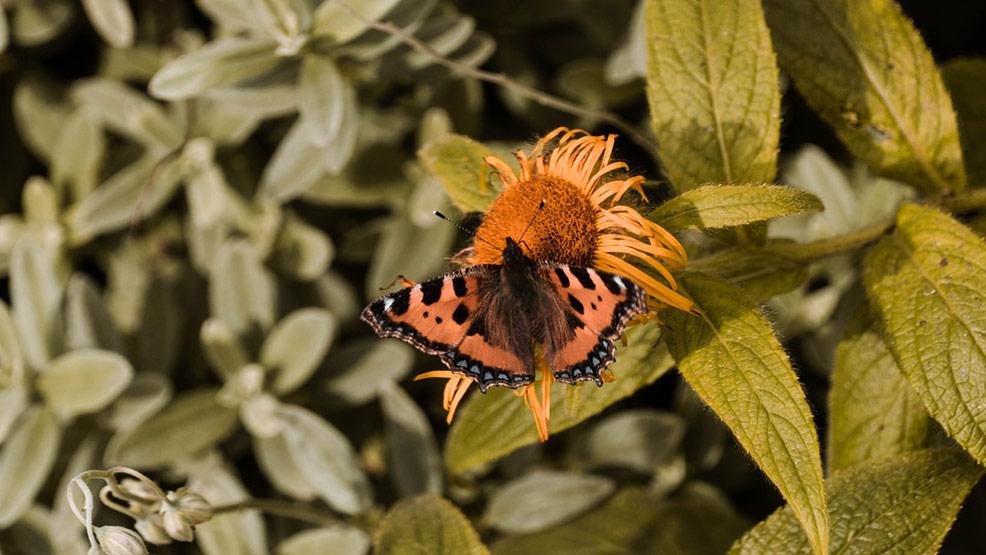 Kwietnik drewniany – sposób na oryginalny ogród i wystrój wnętrza - Zdjęcie główne