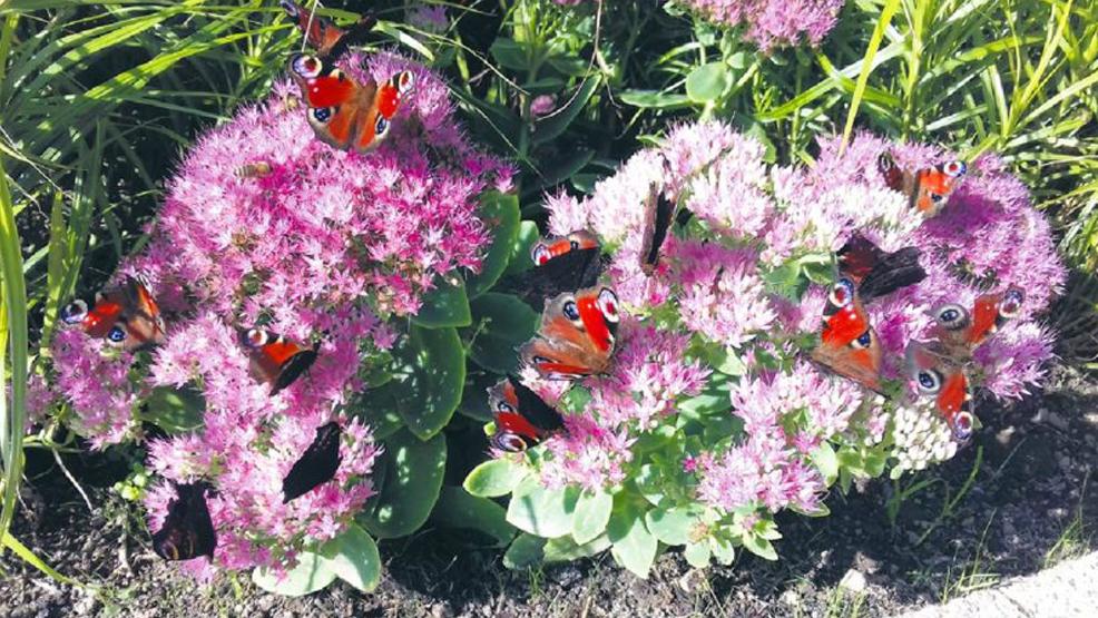Teren przyjazny owadom  - Zdjęcie główne