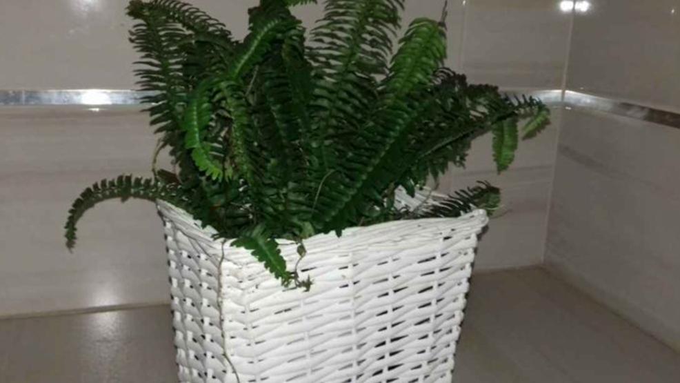 Rośliny oczyszczające powietrze do mieszkania. - Zdjęcie główne