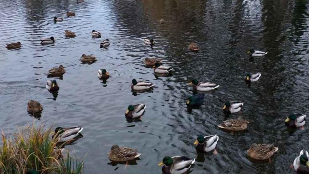 Dokarmianie ptaków zimą. Kiedy i czym dokarmiać ptaki, by nie wyrządzić im krzywdy. - Zdjęcie główne