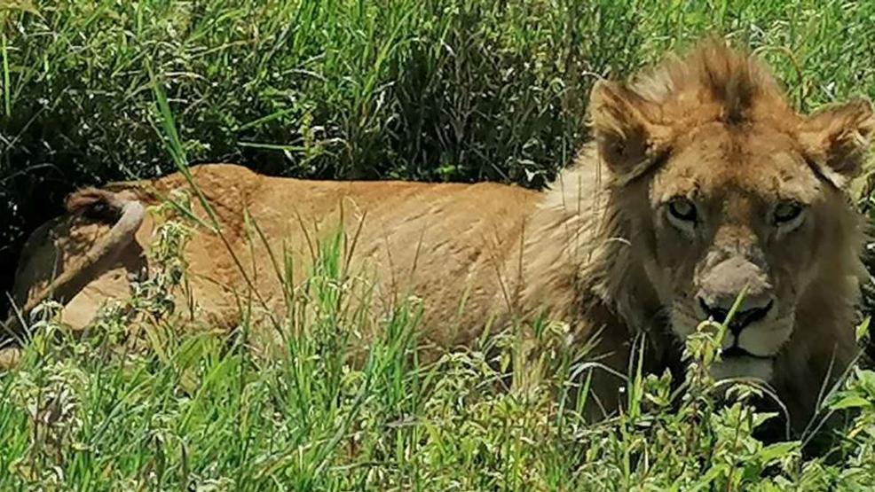 Kobieta na safari w Afryce - Zdjęcie główne