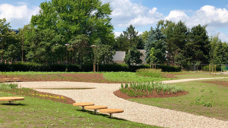 W Lesznie powstał pierwszy w mieście ogród deszczowy - Zdjęcie główne