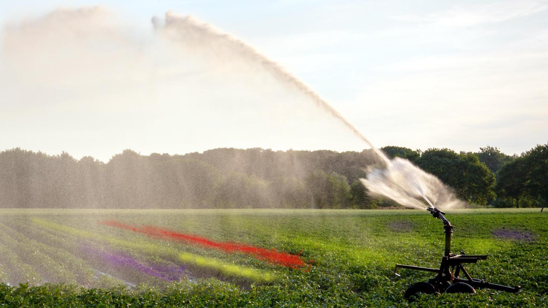 Skąd firma W. Legutko czerpie wodę do nawadniania upraw? - Zdjęcie główne