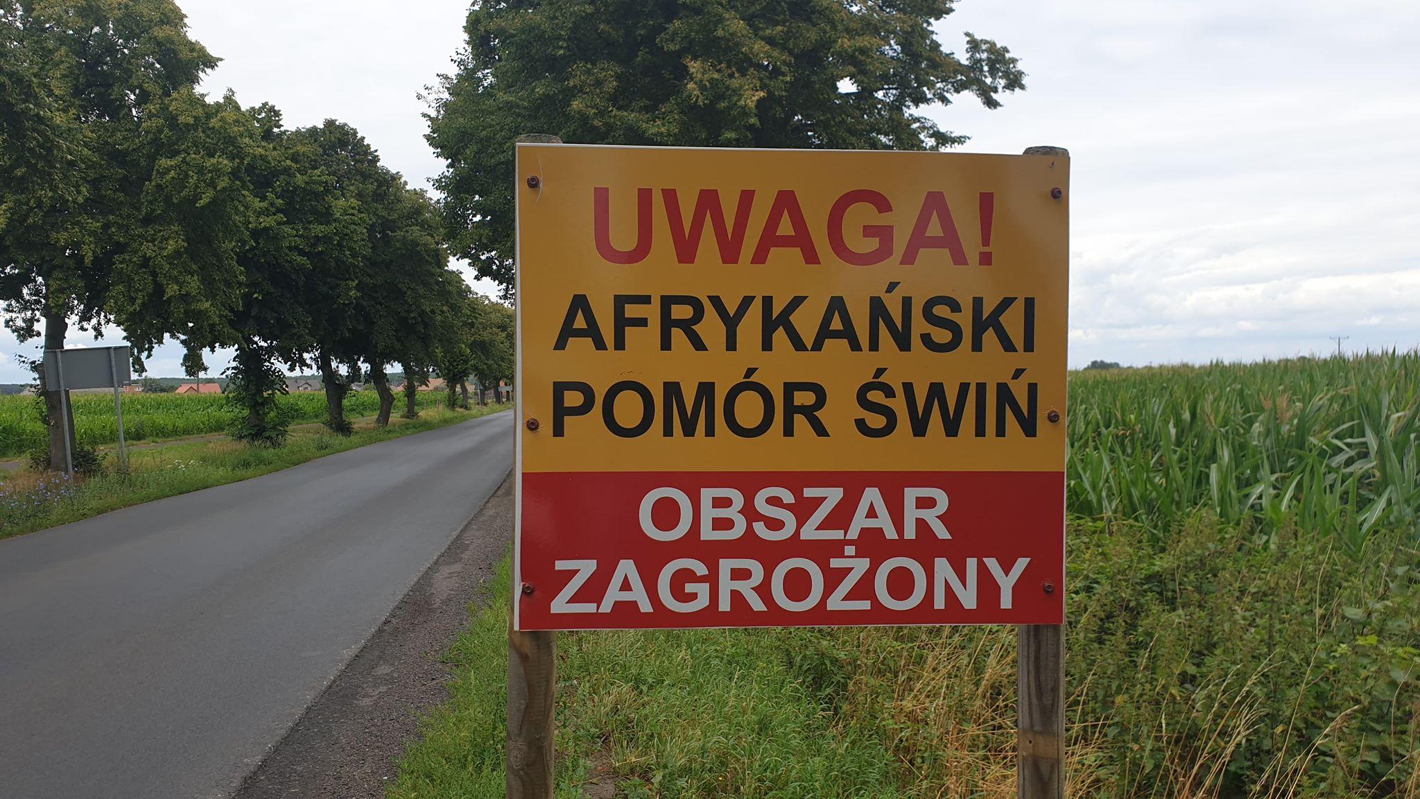ASF w gminie Bojanowo. Jest decyzja w sprawie stad świń w Gierłachowie - Zdjęcie główne
