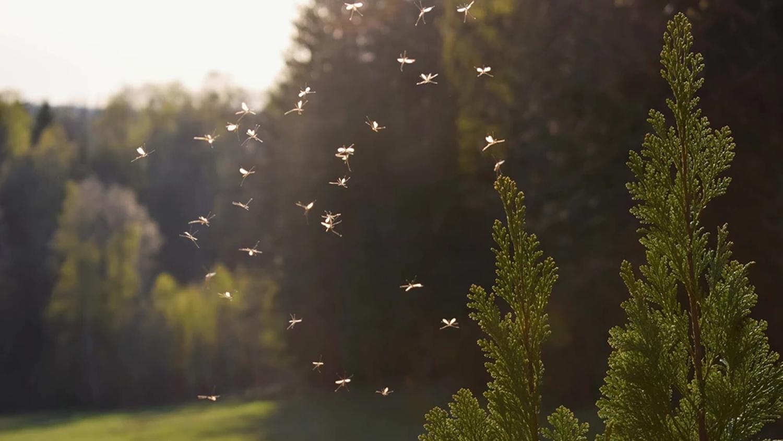 Plaga komarów w Rawiczu. Czy miasto zamierza przeprowadzić opryski?  - Zdjęcie główne