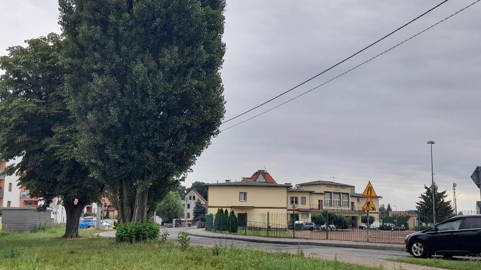 Zadecydowano o losie drzew przy ulicy Spokojnej  - Zdjęcie główne