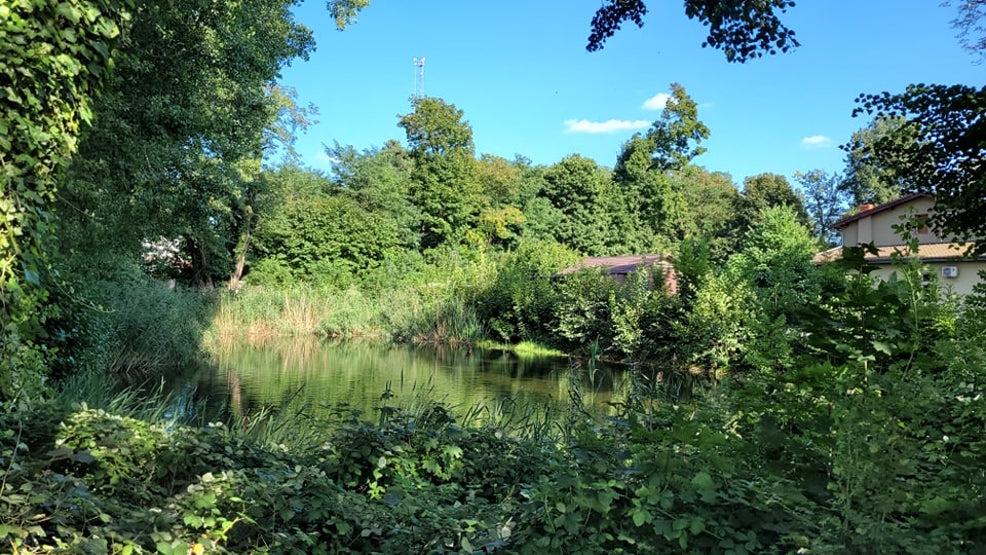 Gmina zagospodaruje tereny zielone w Rawiczu? - Zdjęcie główne