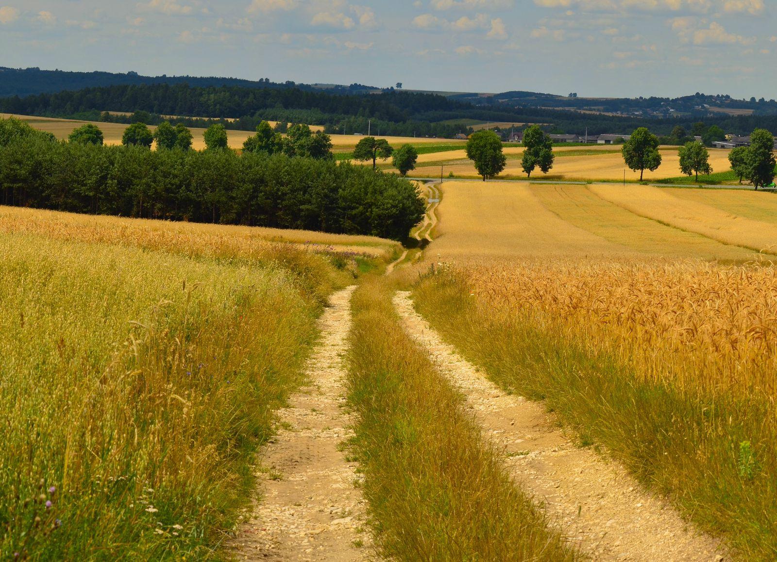 Jak uzyskać pomoc na modernizację gospodarstwa? Będzie darmowe spotkanie online dla rolników - Zdjęcie główne