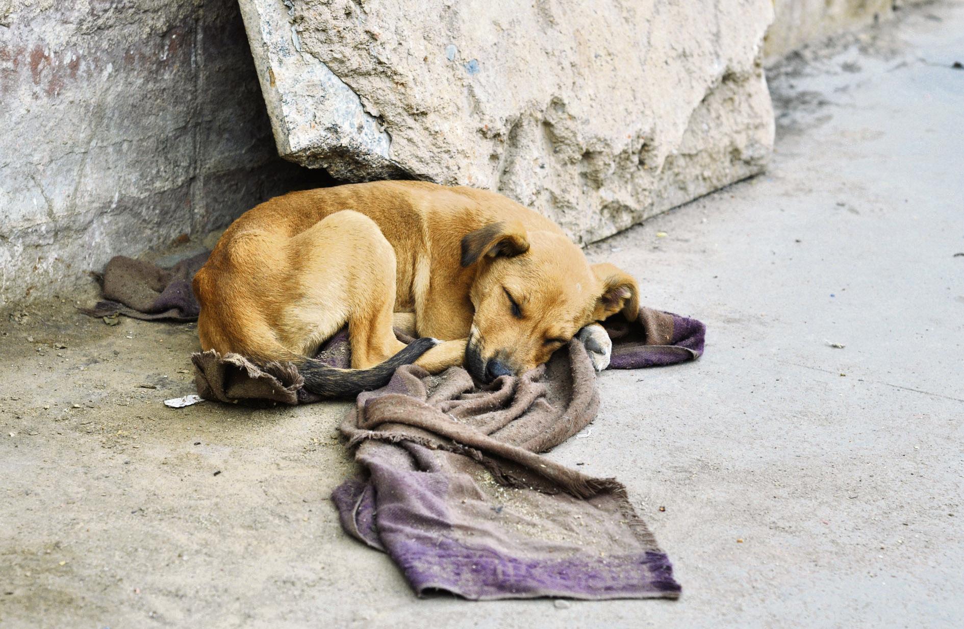 Gizałki. Co robić, kiedy widzisz bezdomne, błąkające się zwierzę?  - Zdjęcie główne